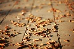 Hojas de otoño caidas en la tierra Fotos de archivo
