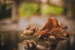 Hojas de otoño caidas en la tierra Foto de archivo