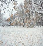 Hojas de otoño caidas en nieve en el bosque Imagenes de archivo