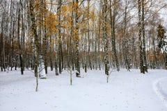 Hojas de otoño caidas en nieve en el bosque Imagen de archivo libre de regalías