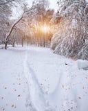 Hojas de otoño caidas en nieve en el bosque Imagen de archivo