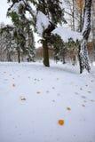 Hojas de otoño caidas en nieve en el bosque Fotografía de archivo