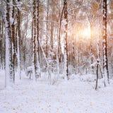 Hojas de otoño caidas en nieve en el bosque Fotos de archivo libres de regalías