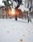 Hojas de otoño caidas en nieve en el bosque Fotos de archivo