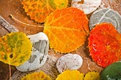 Hojas de otoño caidas en piedras Fotografía de archivo libre de regalías