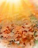 Hojas de otoño caidas iluminadas por la luz del sol imágenes de archivo libres de regalías