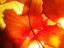 Hojas de otoño caidas wallpaper Estructura de las hojas secadas Foto de archivo