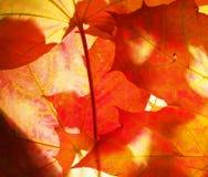 Hojas de otoño caidas wallpaper Estructura de las hojas secadas Imagenes de archivo