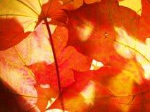 Hojas de otoño caidas wallpaper Estructura de las hojas secadas Imagen de archivo libre de regalías