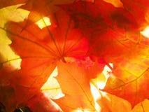 Hojas de otoño caidas wallpaper Estructura de las hojas secadas Fotografía de archivo