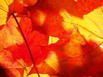 Hojas de otoño caidas wallpaper Estructura de las hojas secadas Foto de archivo libre de regalías