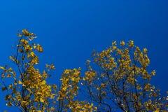 Hojas de otoño, cielo Fotos de archivo