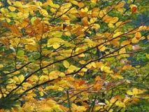 Hojas de otoño coloreadas fotografía de archivo libre de regalías