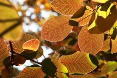 Hojas de otoño coloreadas imagenes de archivo