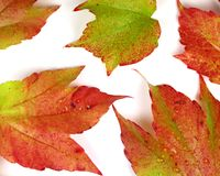 Hojas de otoño coloreadas en el fondo blanco foto de archivo libre de regalías