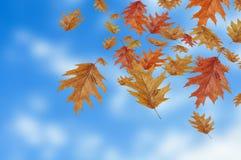 Hojas de otoño coloreadas que caen abajo en fondo de la falta de definición Imágenes de archivo libres de regalías