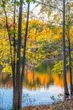 Hojas de otoño coloridas Fotos de archivo