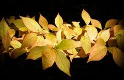 Hojas de otoño coloridas Foto de archivo libre de regalías