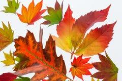 Hojas de otoño coloridas Imagenes de archivo