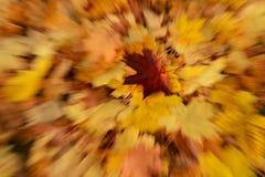Hojas de otoño coloridas Fotografía de archivo