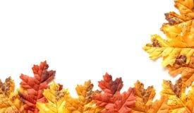 Hojas de otoño coloridas aisladas en un backgro blanco Fotografía de archivo libre de regalías