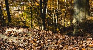 Hojas de otoño coloridas de Brown Imagen de archivo libre de regalías