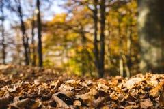 Hojas de otoño coloridas de Brown Fotografía de archivo