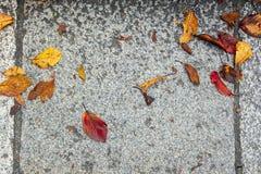 Hojas de otoño coloridas caidas en el fondo de piedra de la textura del pavimento del granito gris claro, Kyoto fotografía de archivo