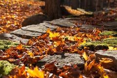 Hojas de otoño coloridas, Canadá Foto de archivo libre de regalías