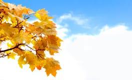 Hojas de otoño coloridas con el cielo azul Fotos de archivo