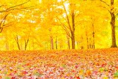 Hojas de otoño coloridas con el fondo borroso bosque. Imagenes de archivo