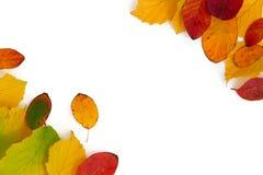 Hojas de otoño coloridas en dos esquinas aisladas en el backgrou blanco Fotografía de archivo