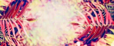 Hojas de otoño coloridas en el fondo borroso de la naturaleza Foto de archivo libre de regalías