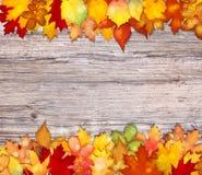 Hojas de otoño coloridas en fondo de madera Fotos de archivo