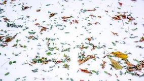 Hojas de otoño coloridas en la nieve Fotografía de archivo libre de regalías