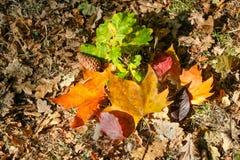 Hojas de otoño coloridas en la tierra Fotografía de archivo libre de regalías