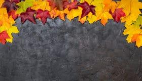Hojas de otoño coloridas en un fondo de textura negro Foto de archivo