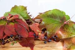Hojas de otoño coloridas en una tabla de madera Fotos de archivo libres de regalías