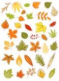 Hojas de otoño coloridas fijadas Imagenes de archivo