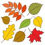 Hojas de otoño coloridas fijadas Vector dibujado mano del ejemplo Fotos de archivo libres de regalías