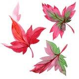 Hojas de otoño coloridas de la acuarela Follaje floral del jardín botánico de la planta de la hoja Elemento aislado del ejemplo ilustración del vector