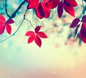 Hojas de otoño coloridas sobre fondo borroso de la naturaleza Fotos de archivo