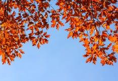 Hojas de otoño coloridas y brillantes y fondo del cielo azul Foto de archivo