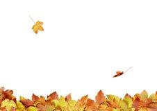 Hojas de otoño - composición 3s1 fotos de archivo