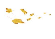 Hojas de otoño - composición 4s2 Imagenes de archivo