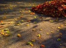 Hojas de otoño con fotos de archivo libres de regalías