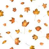 Hojas de otoño con brillar intensamente detrás ligero Fotos de archivo