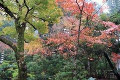 Hojas de otoño con color amarillo-naranja y rojo verde en jardín Fotos de archivo
