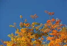 Hojas de otoño con el cielo azul Imágenes de archivo libres de regalías