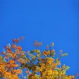 Hojas de otoño con el cielo azul Foto de archivo